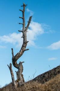 Klätterträd