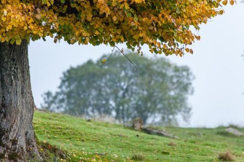 Lövö - hamlade träd