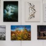 Bilder i BioFoto-montern