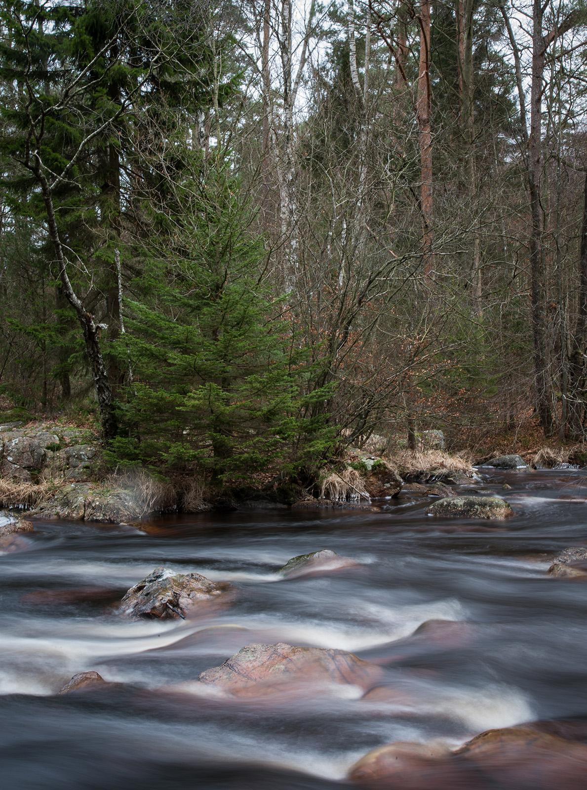 Gott om vatten i ån Assman  Foto: Curt Leidig